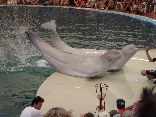 delfinarium v turecku