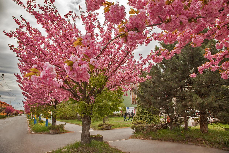 Filozofická fakulta Prešovskej univerzity