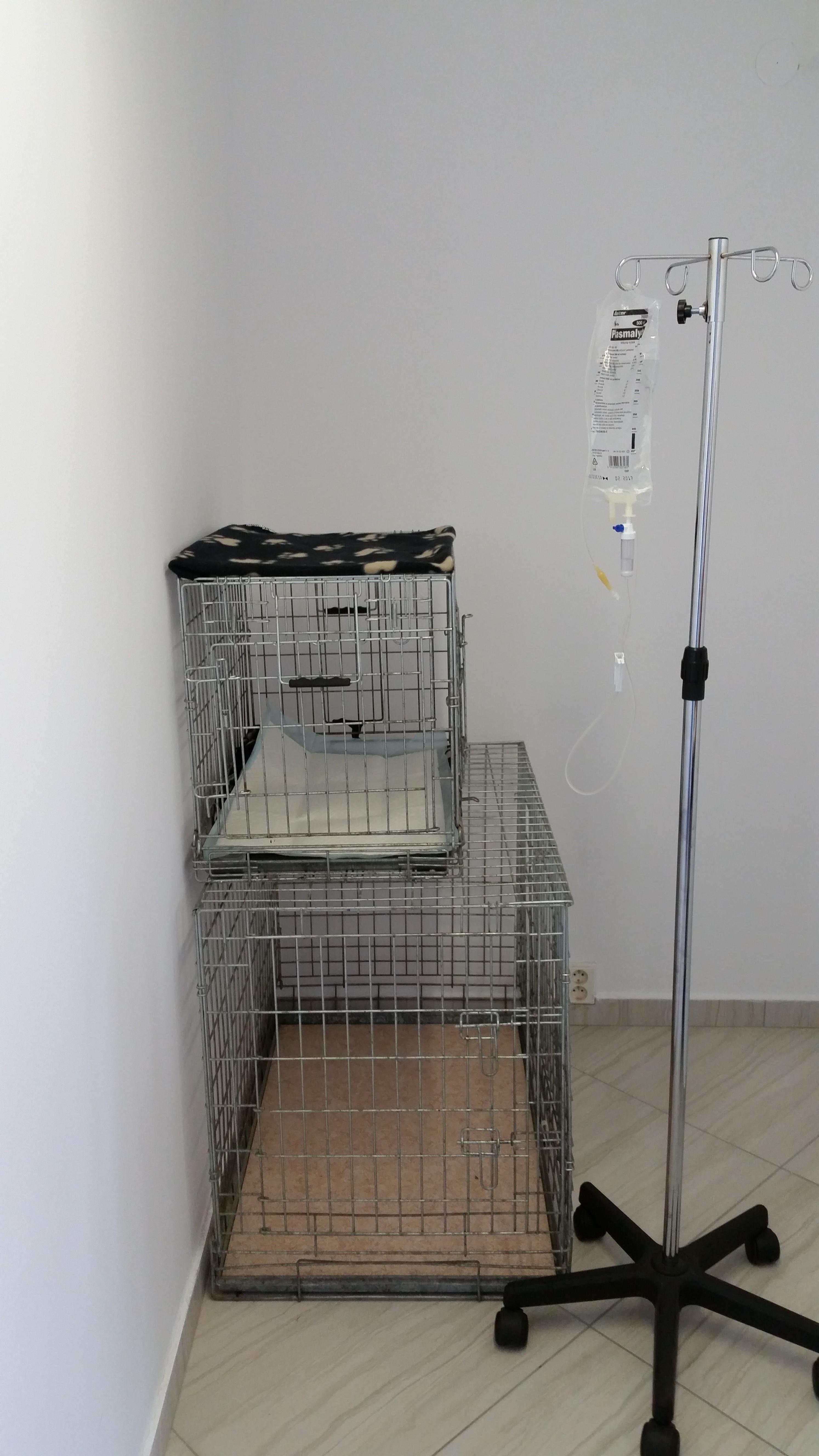 veterinar sigivet nitra
