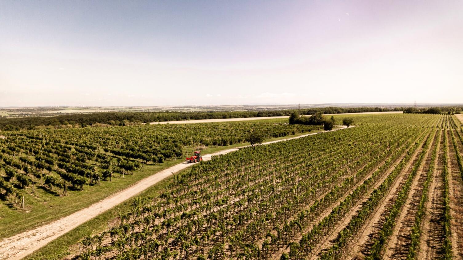 vino PD ivanka vinoteka