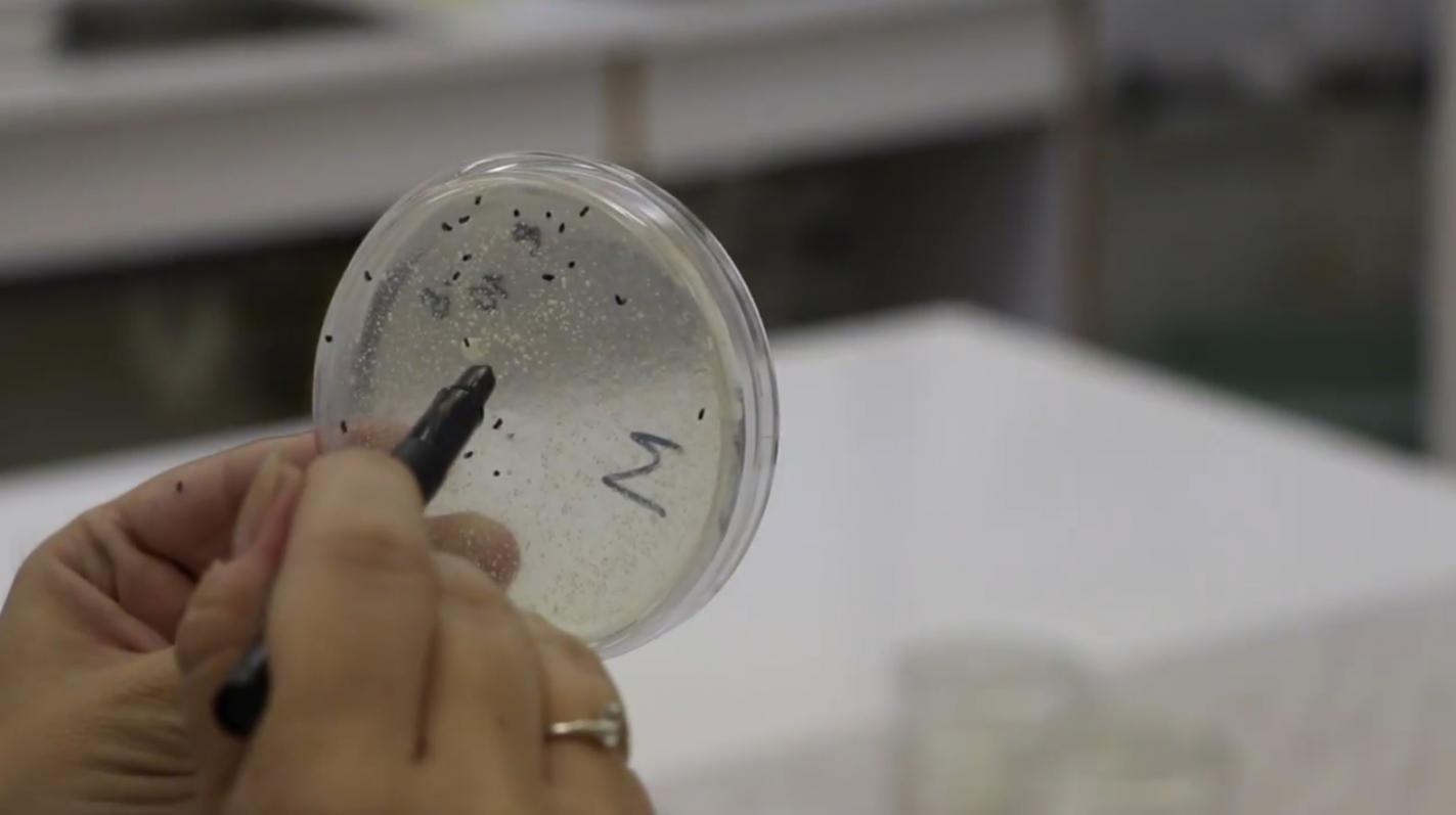 laboratoria potravinova bezpecnost nitra
