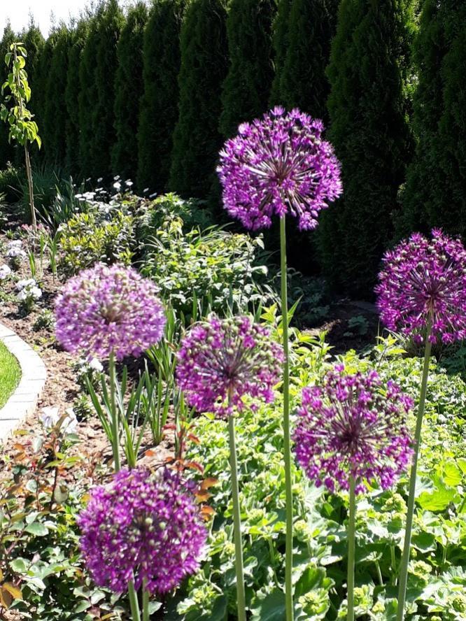 dizajn zahrady spolahliva firma nitra