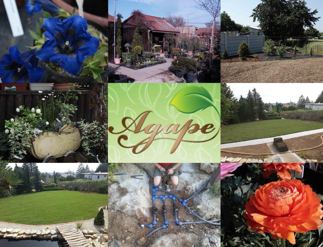 daec350b8 Agapé-rastliny pre vytvorenie oázy pokoj - Katalóg firiem   moja Nitra