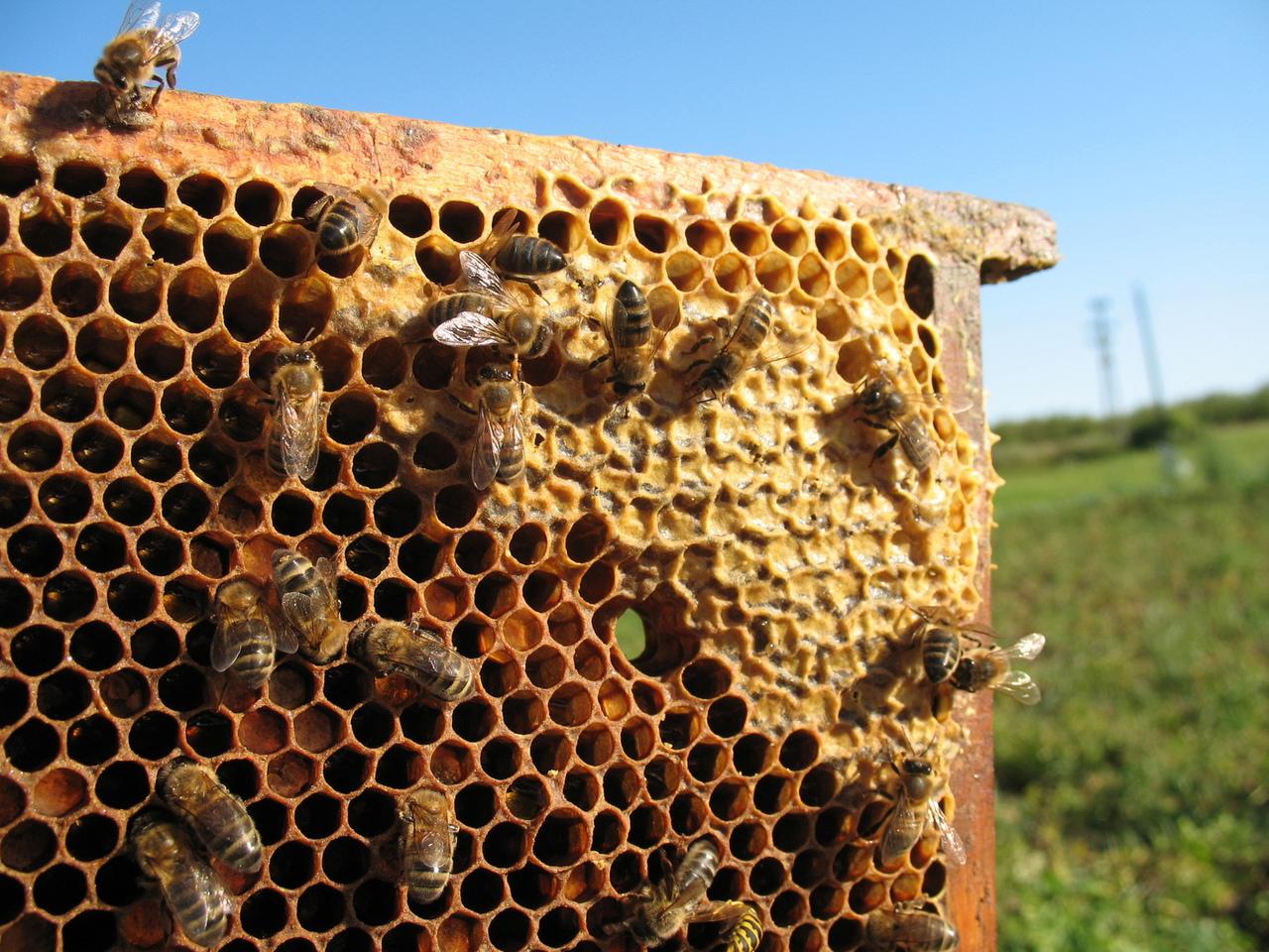 caa6a50bfefe7 Akreditovaný kurz: Základy chovu včiel - Kariéra | moja Nitra