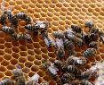 Akreditovaný kurz Základy chovu včiel, spravodajnitra.sk