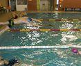 Súkromná škola plávania Delfín Nitra - komplexná výuka plávania, spravodajnitra.sk