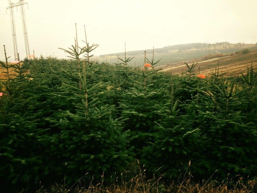 073937f41c Siky Gardens a ich vianočné stromček - Služby a rôzne
